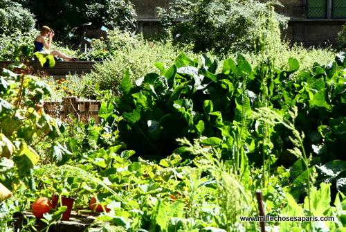 Cluny jardin médiéval 008