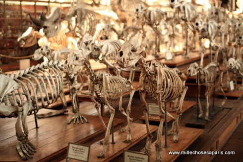 Museum histoire naturelle054