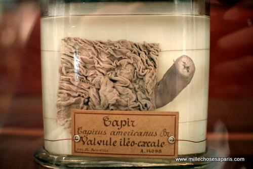 Museum histoire naturelle073