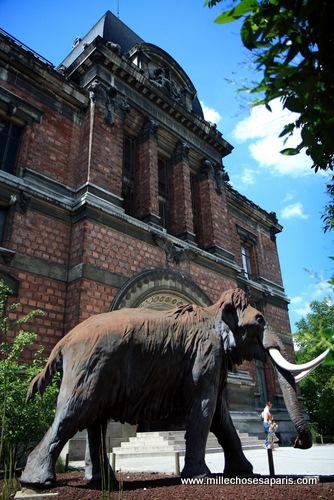 Museum histoire naturelle189